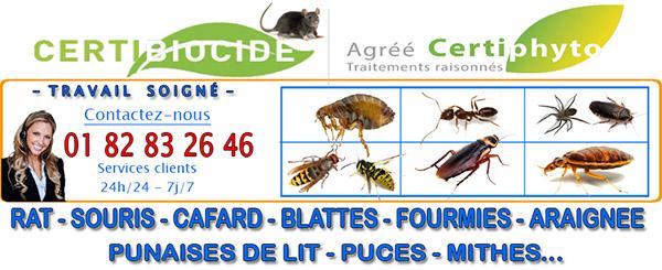 Nid de Frelons Puiseux en France 95380